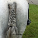 White Horse, Show Time, Braided Tail