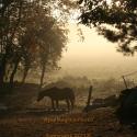 sunrise-horse